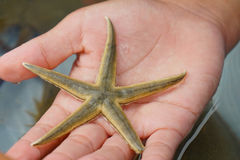 Star fish holding Stock Images