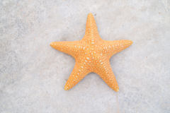 Star fish. Pic closeup of star fish Royalty Free Stock Photo