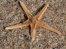 Star fish on sand. Star fish & Cleopatra beach sand Stock Photography