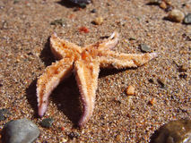 Star Fish on Sand. Upside down Royalty Free Stock Photography