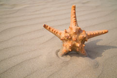Star fish on sand background Royalty Free Stock Photography
