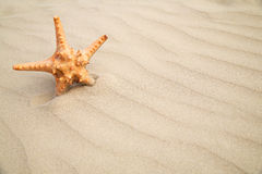Star fish on sand background Stock Photo