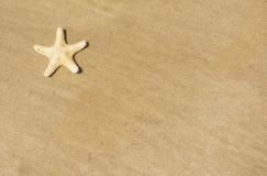 Star fish on sand, beach background Royalty Free Stock Photo