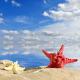 Star fish with sand Royalty Free Stock Photography