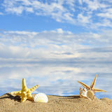 Star fish with sand Stock Photos