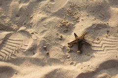 Star fish on a sandy beach Royalty Free Stock Photography