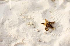 Star fish on a sandy beach Stock Photo