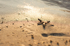 Star fish on a sandy beach Royalty Free Stock Photo