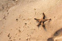 Star fish on a sandy beach Royalty Free Stock Photos