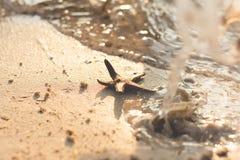 Star fish on a sandy beach Stock Photo