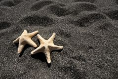 Star fish in Santorini -3 Stock Photo