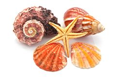 Star fish and sea shells Royalty Free Stock Images