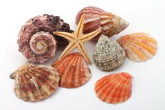 Star fish and sea shells Royalty Free Stock Photo