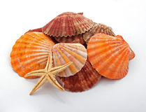 Star fish and sea shells. Over a white background Stock Photo