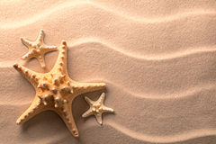 Star fish or sea star in the rippled beach sand Royalty Free Stock Images