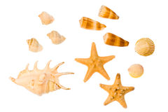 Star-fish and seashells. Isolated on white Stock Image