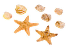 Star-fish and seashells. Isolated on white Stock Photo