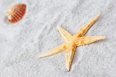 Star fish and shell on sand Royalty Free Stock Images