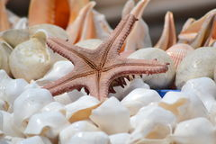 Star fish and shells Stock Photos