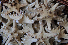 Star fishes background Royalty Free Stock Photography