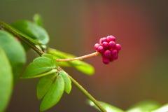 Star Flower stock images