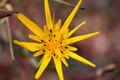 Star or flower? Nice any way Royalty Free Stock Photos