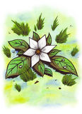 Star Flower (Zen Pictures, 2011) Royalty Free Stock Photo