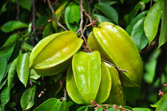 Star fruit Stock Photography