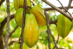 Star fruit Royalty Free Stock Images