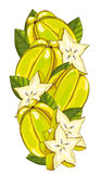 Star Fruit isolated, Vector, composition. Stock Image