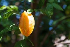 Star Fruit Stock Photos