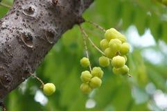 Star gooseberries royalty free stock images