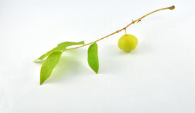 Star gooseberry Stock Photo