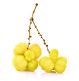 Star gooseberry isolated on white background. Yellow Star gooseberry Royalty Free Stock Photography