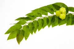 Star gooseberry and leaves Royalty Free Stock Image