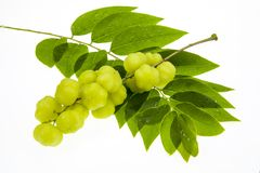 Star gooseberry and leaves Stock Image
