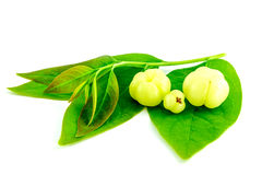 Star gooseberry or Phyllanthus acidus Stock Images