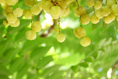 Star gooseberry Royalty Free Stock Images