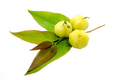 Star gooseberry Stock Image