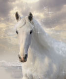 Star horse. Fantastic white horse among stars Royalty Free Stock Image