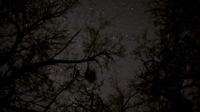 Star Lapse through Branches stock video footage