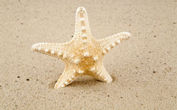 Star Royalty Free Stock Photography
