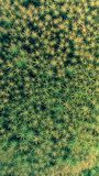 Star Moss background pattern Stock Image
