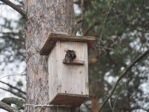 Star nahe dem Vogelhaus Das Nest des k?nstlichen Vogels lizenzfreies stockbild