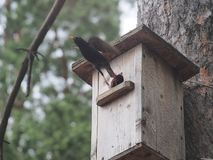 Star nahe dem Vogelhaus Das Nest des k?nstlichen Vogels lizenzfreie stockbilder