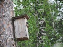Star nahe dem Vogelhaus Das Nest des k?nstlichen Vogels stockfotos