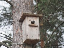Star nahe dem Vogelhaus K?nstliches bird& x27; s-Nest lizenzfreies stockfoto