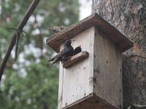 Star nahe dem Vogelhaus K?nstliches bird& x27; s-Nest stockbild