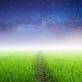 Star night and Way in Green rice fields Stock Images