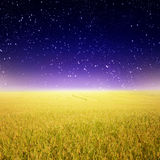 Star night and Yellow rice fields Stock Photography